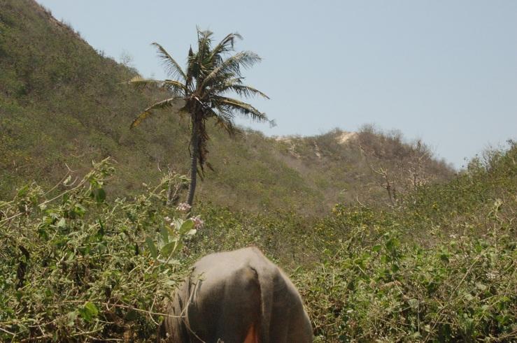 29. sept - Kuta Lombok (16)