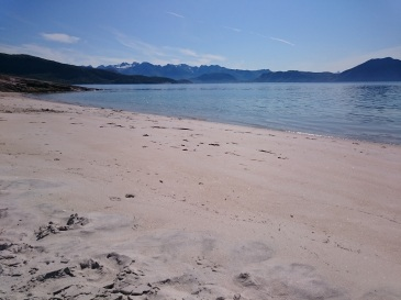 Hornneset. A chilly summer swim.